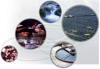 Aquaculture supplies wastewater treatment organic shrimp for Ornamental pond supplies
